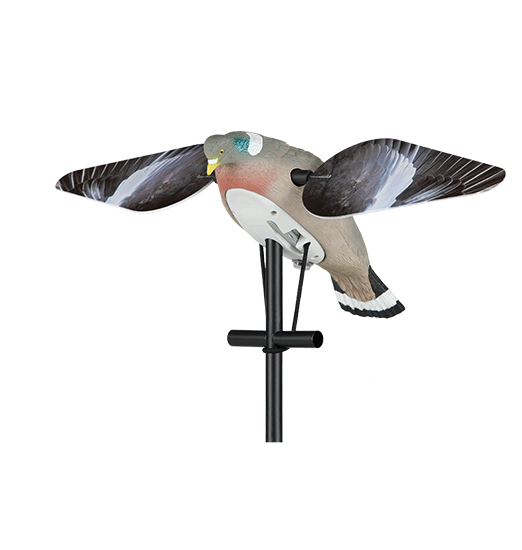 Lucky pigeon hd