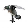 lucky pigeon fl